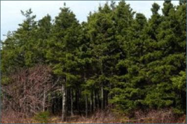 Celtic Colours; Calum's Forest: A Guided Walk